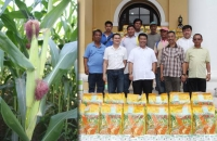 Ilocos Sur, Succeeds to top 5 Quality Corn Achiever